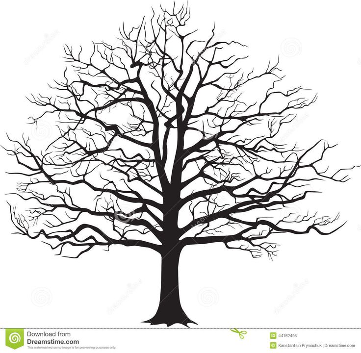 Oak Tree Clipart Black And White