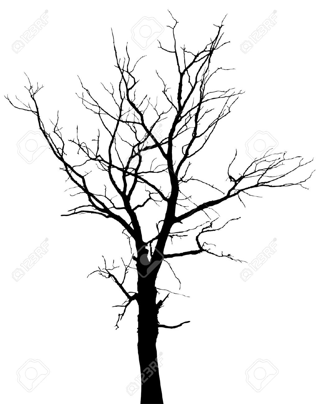 1026x1300 Drawn Dead Tree Oak Tree Bark