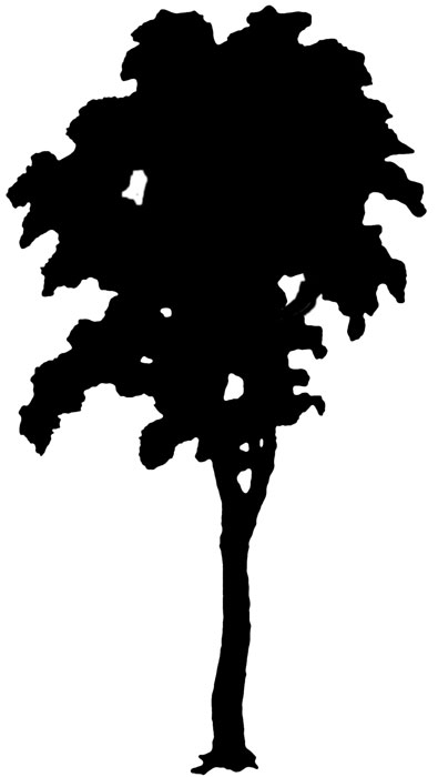 395x700 Tree Silhouettes Tree Silhouette, Oak Tree And Silhouettes