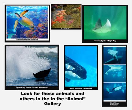 432x360 Ocean Scenes