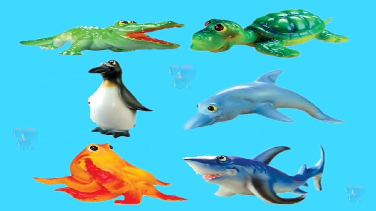 1280x720 Sea Animals Video For Children Ocean Animals For Kids Preschool