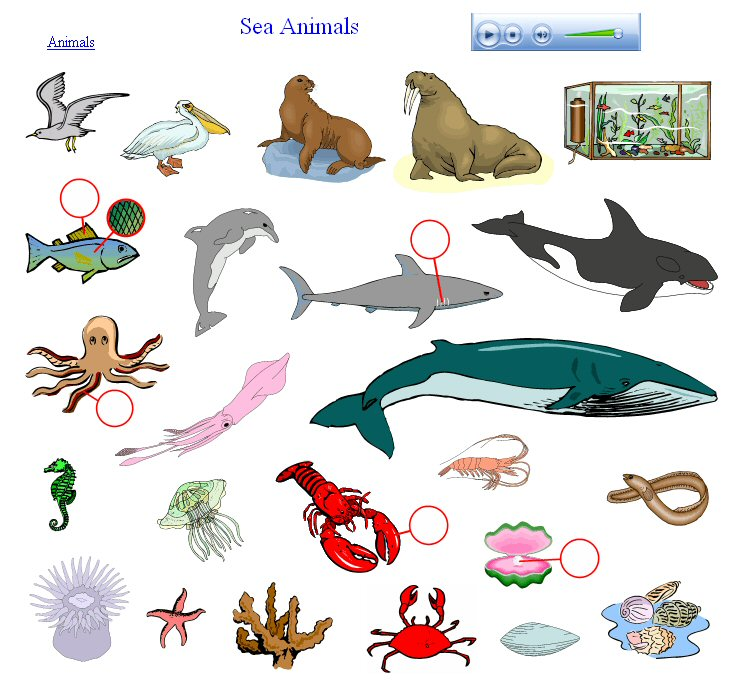 738x685 Sea Life Clipart Animal Population