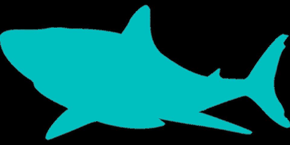 960x480 Mako Shark Clipart Transparent Background