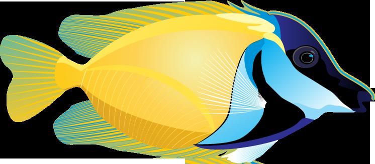 746x328 Tropical Fish Clipart Pretty Fish
