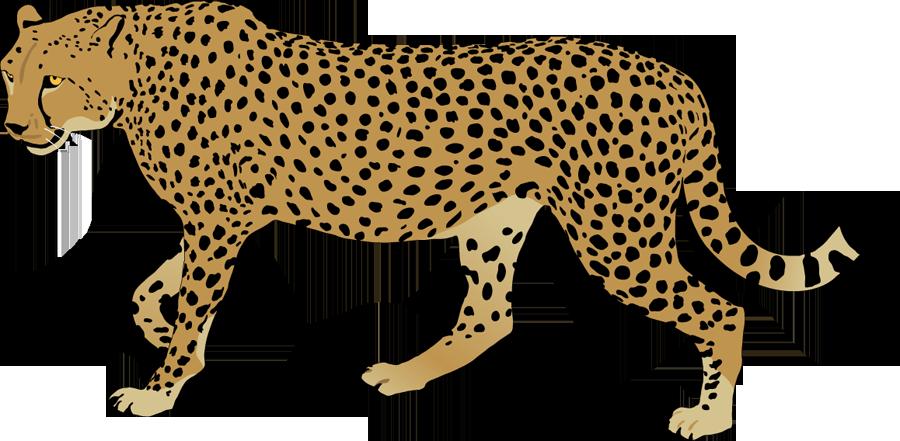 900x441 Ocelot Clipart Cheetah