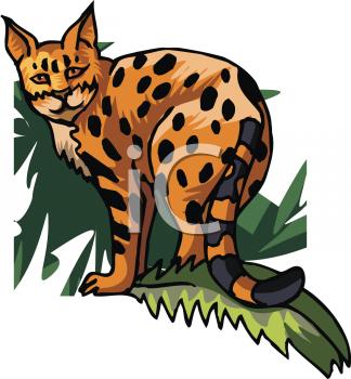 324x350 Royalty Free Ocelot Clip Art, Big Cat Clipart