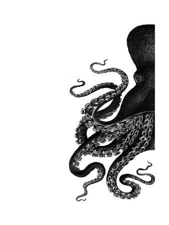 338x450 Octopus, Posters And Prints