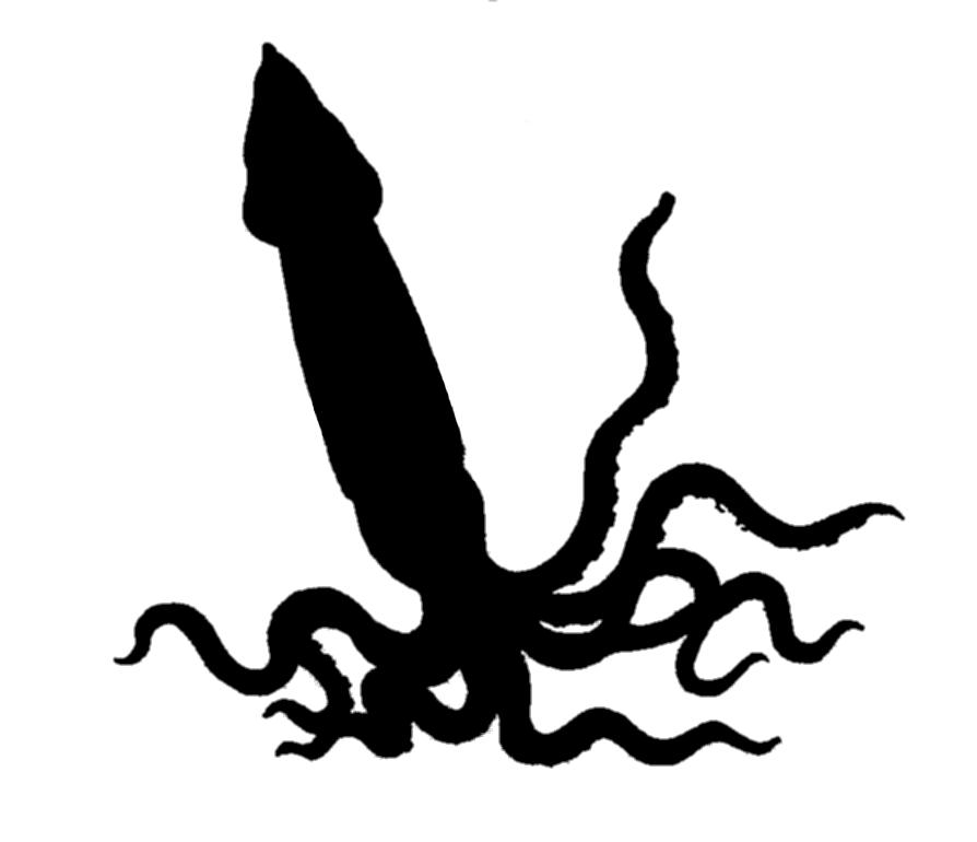 894x770 Squid Clipart Transparent
