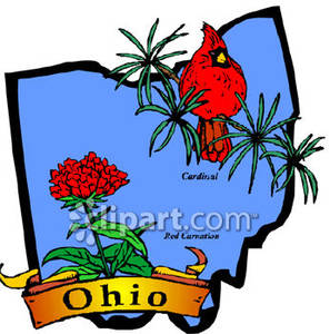 297x300 State Flower And Bird Of Ohio