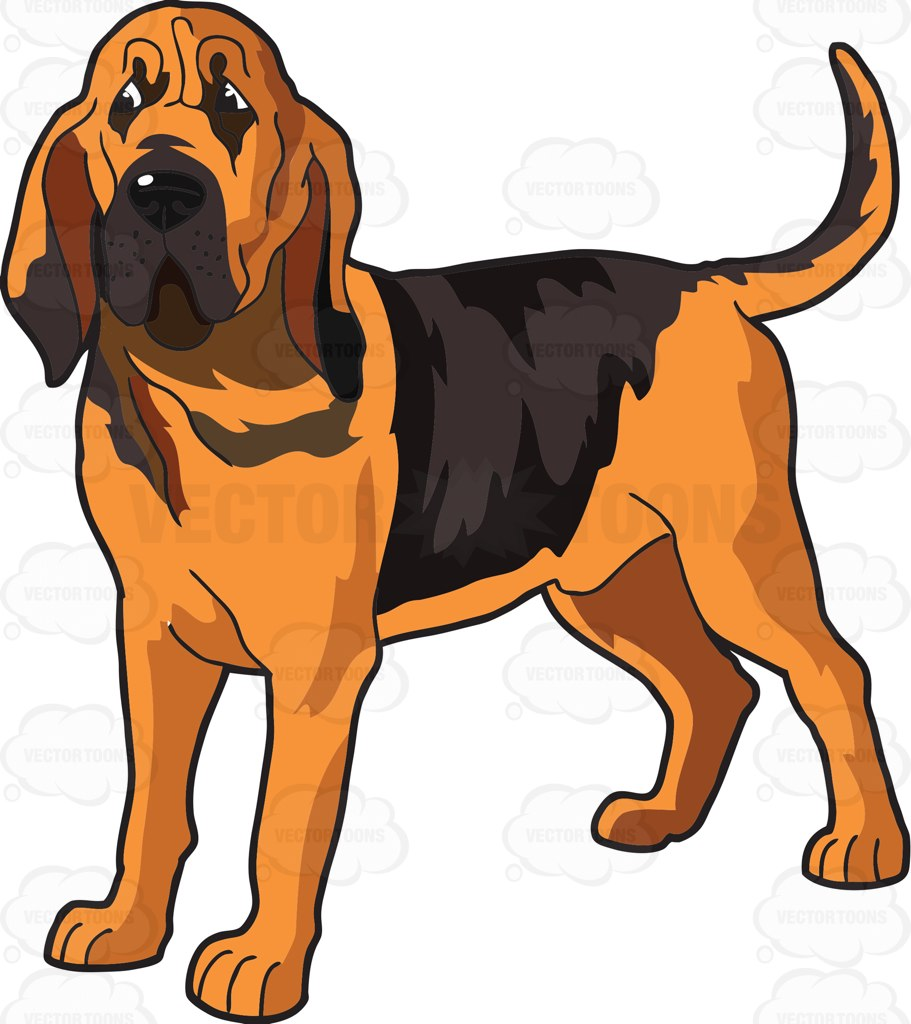 911x1024 Bloodhound Clipart Old Dog