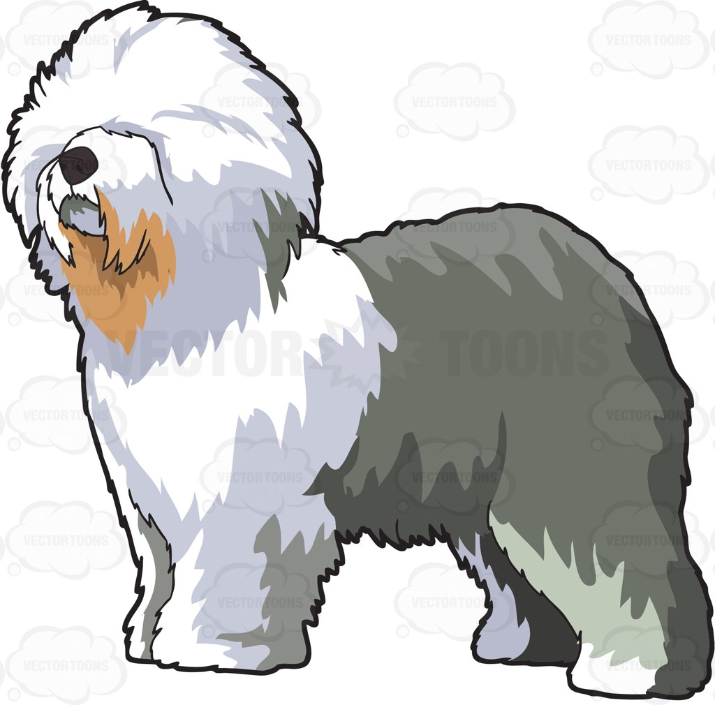 1024x1010 A Fluffy Old English Sheepdog English Sheepdog