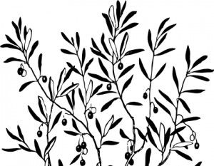 Olive Branch Clipart Free Download Best Olive Branch Clipart On