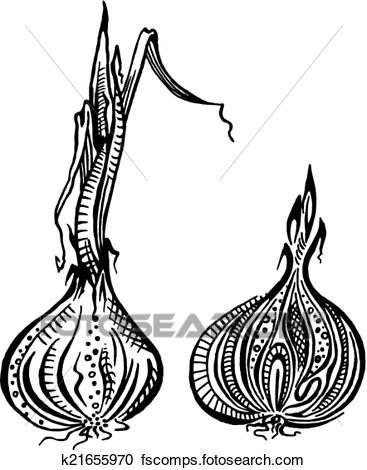 Onion Clipart Black And White