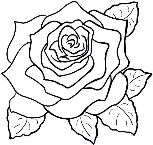 500x473 Drawings Roses