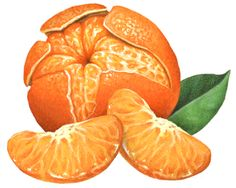 236x188 One Whole Orange With An Orange Leaf And Flower Coming Out