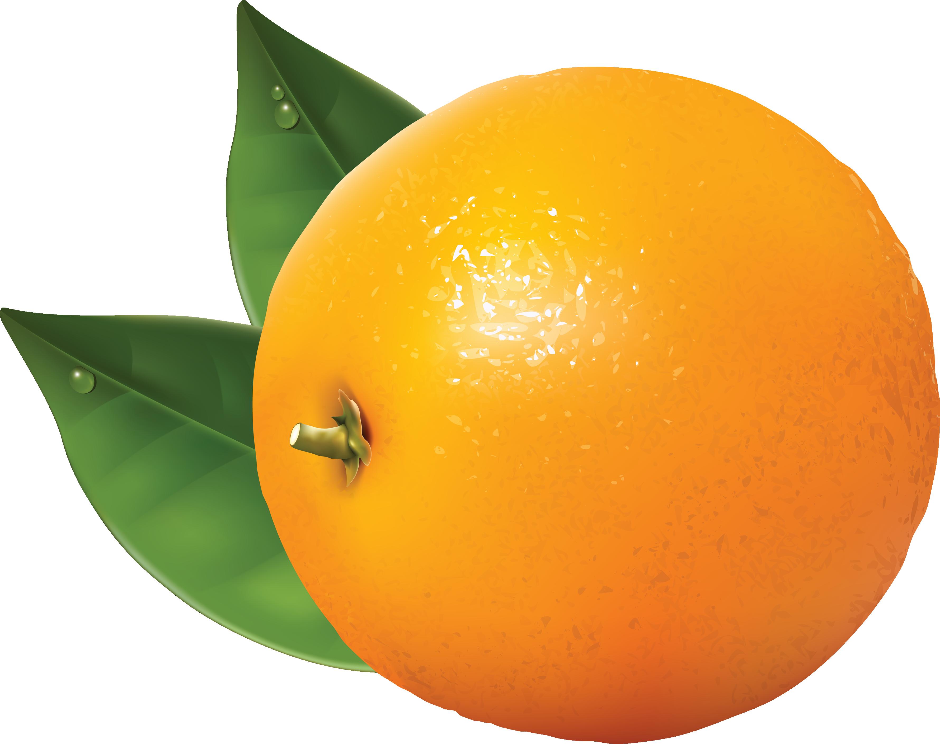 3560x2818 Orange Clip Art Free Clipart Images 4