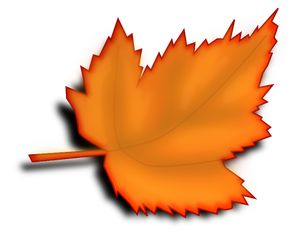 300x234 The Best Maple Leaf Clipart Ideas Maple Leaf