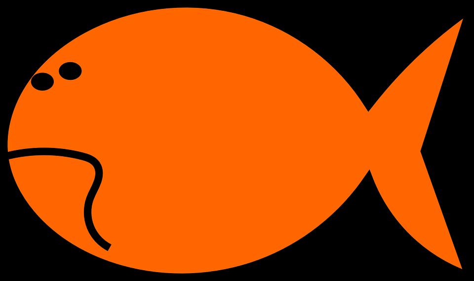 960x570 Gold Fish clipart orange fish