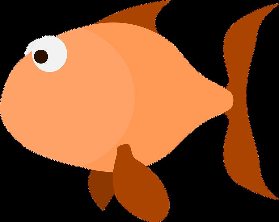 903x720 Salmon clipart orange fish