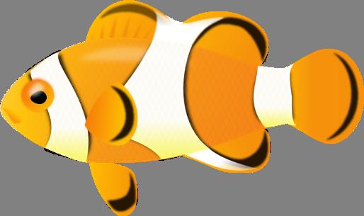 514x305 Clown Fish Clipart