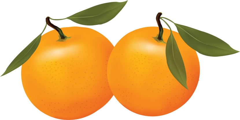 830x415 Orange Slice Icon Clipart