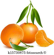 191x194 Tangerine Slices Clip Art Illustrations. 532 Tangerine Slices