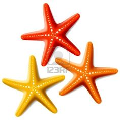 236x236 Starfish Clip Art Coral Color Starfish Prints Clip Art
