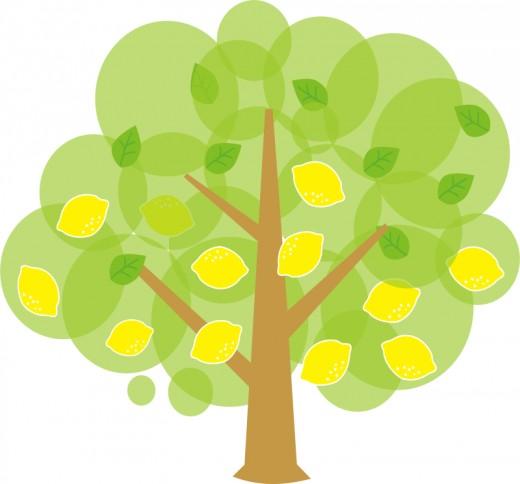 520x484 Tree Clip Art 175 Free Clip Art Trees Hubpages