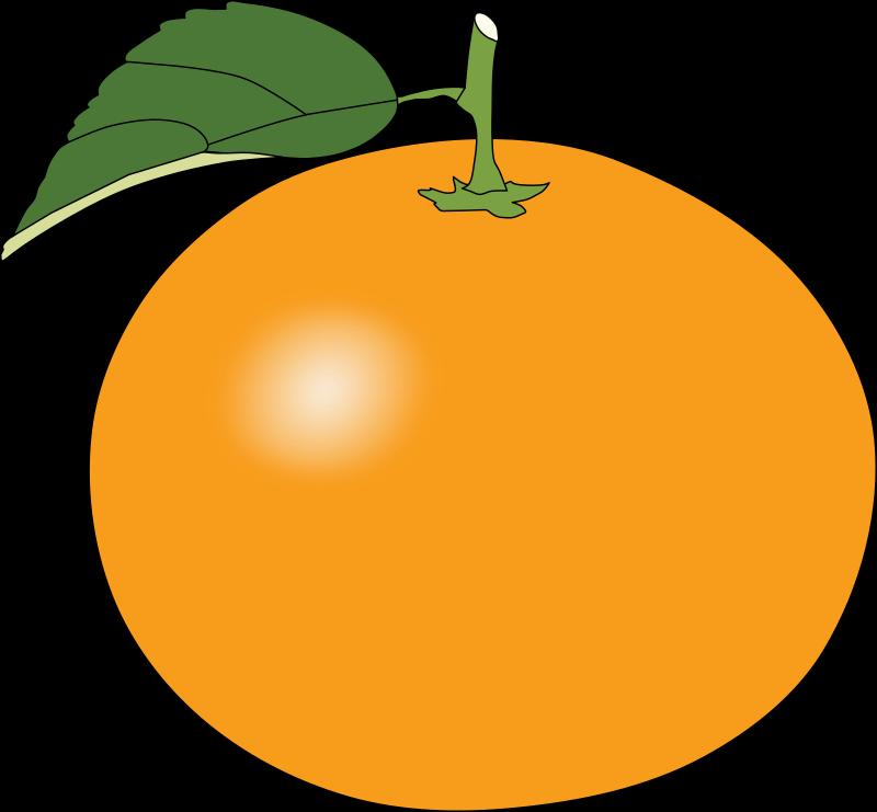 800x741 Free To Use Amp Public Domain Oranges Clip Art
