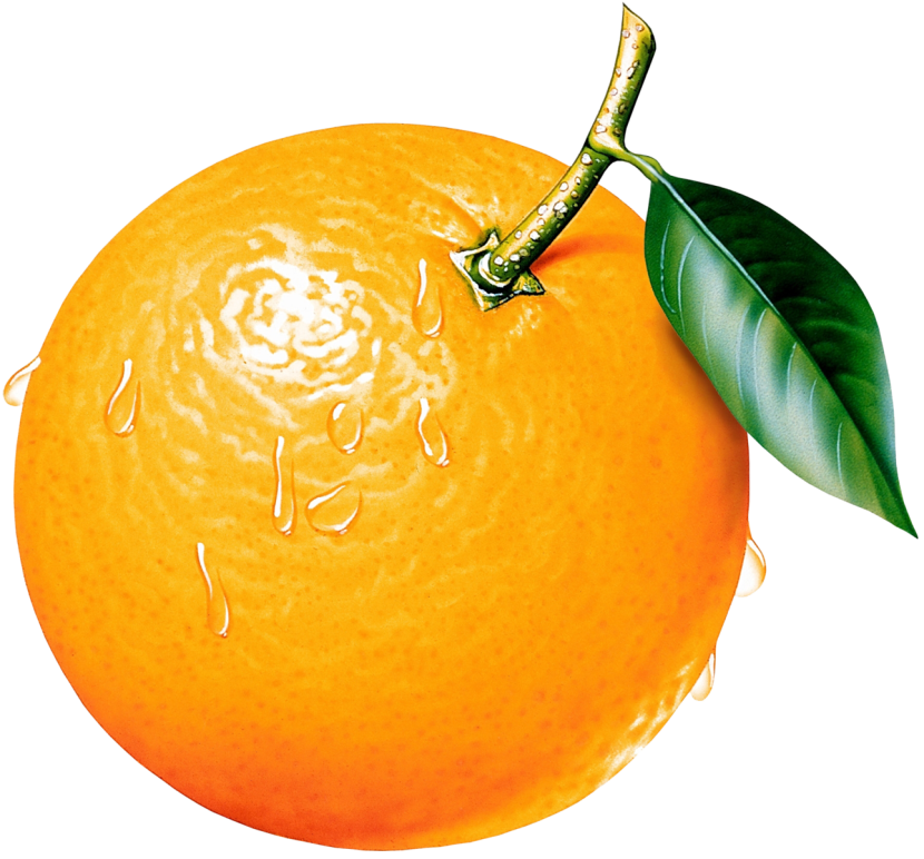 830x772 Best Orange Clip Art