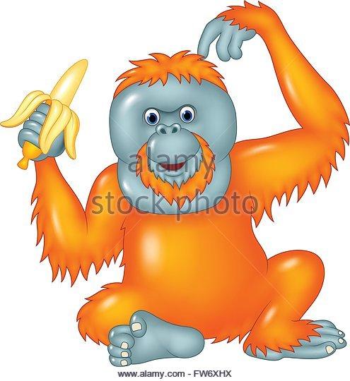 495x540 Orangutan Eating Banana Stock Photos Amp Orangutan Eating Banana