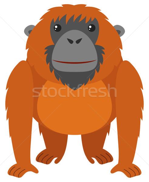 491x600 Orangutan Stock Vectors, Illustrations And Cliparts Stockfresh