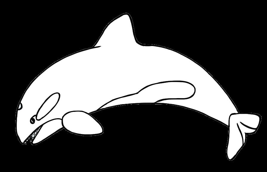 894x575 Killer Whale Clipart Arctic Habitat