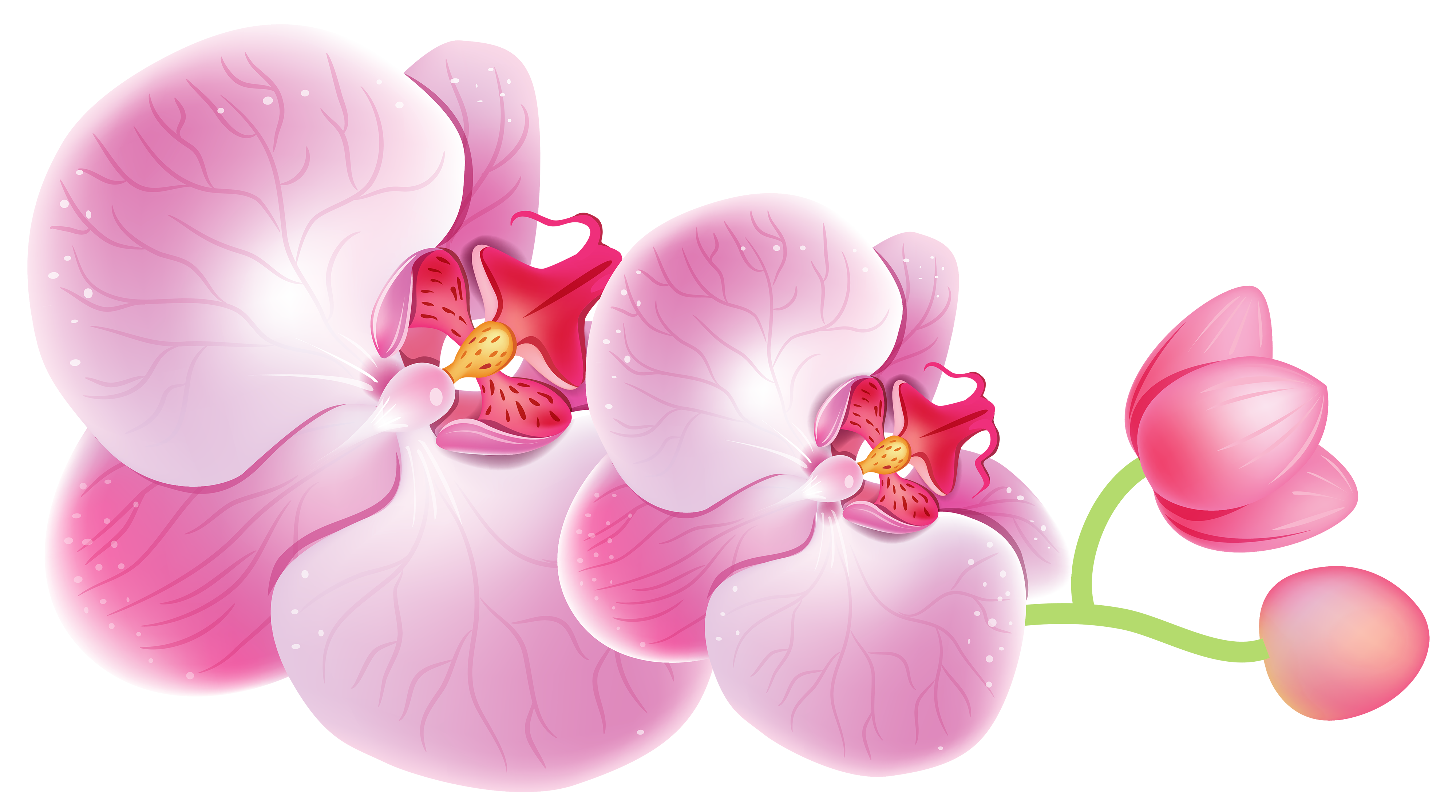 Orchid Flower Clipart | Free download on ClipArtMag