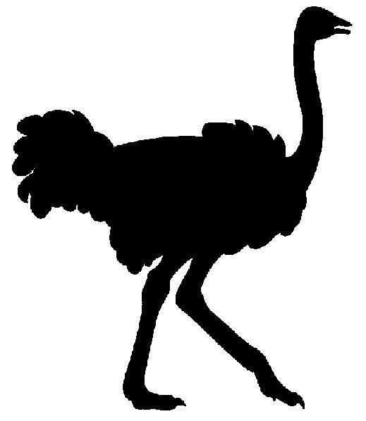 Ostrich Cliparts
