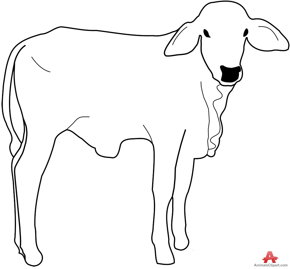 999x926 Cow Calf Outline Drawing Clipart Free Clipart Design Download