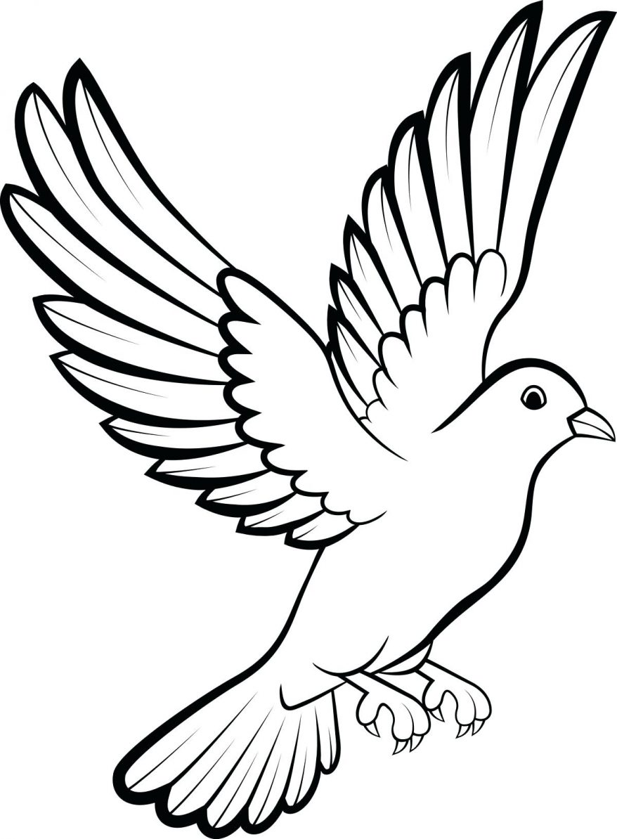878x1194 Dove Birds Drawings Best 145 Interesting Outline Of A Pictures