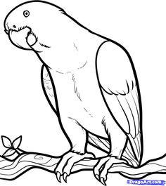 236x265 Parrot Outline By Hamdhan24 Faith Outlines