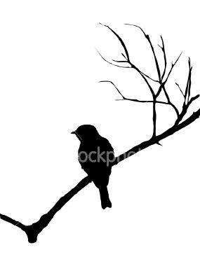 285x380 Best Bird Outline Ideas Bird Patterns, Photo