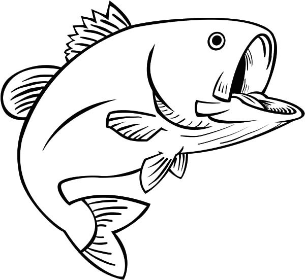 600x552 Best Bass Fish Outline