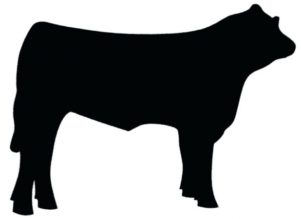 618x450 Dairy Cow 25 Appealing Outline Definition In Literature Outline