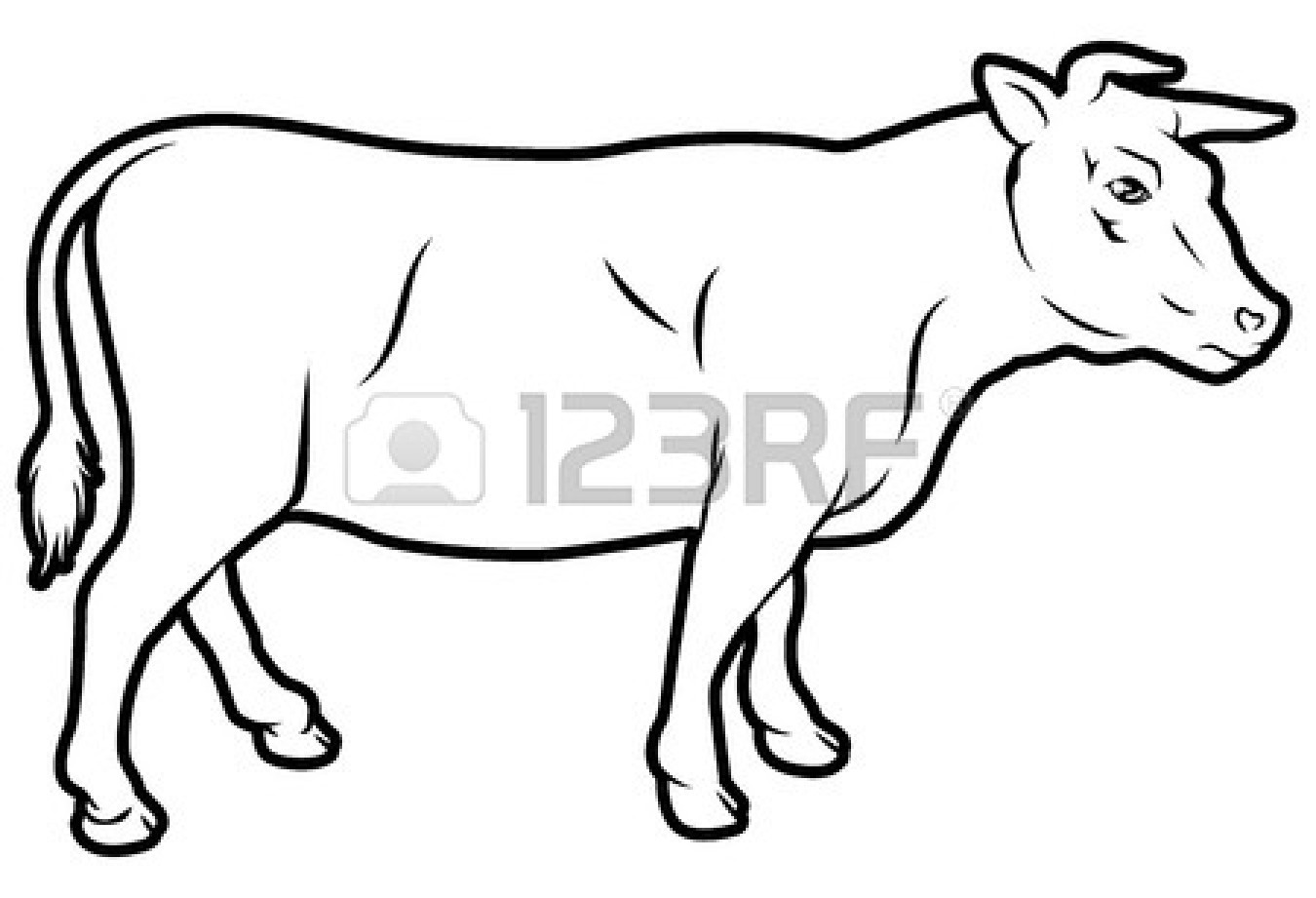 1350x921 Drawn Cow Beef Cow