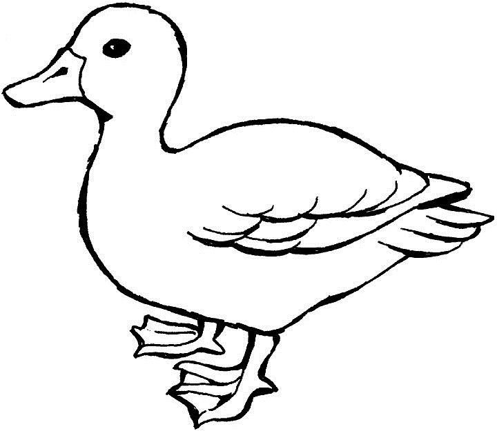Outline Of A Duck