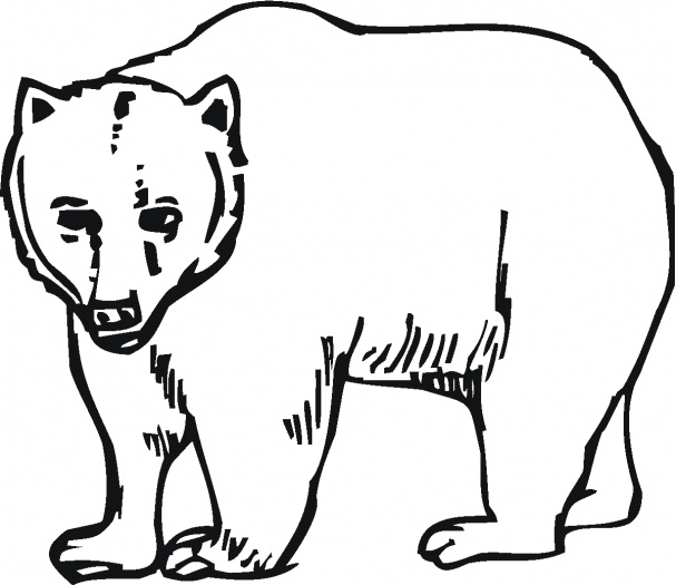 607x525 Bear Coloring Pages 1