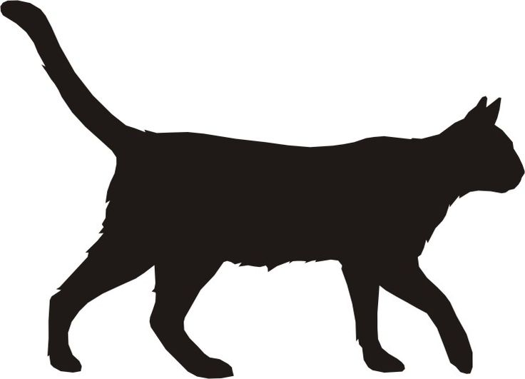 736x531 Big Cat Clipart Dog Outline