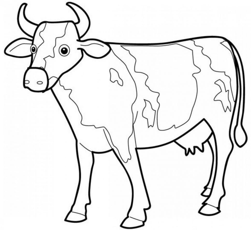 970x889 Animal Cattle Coloring Pages Outline Picture Of Cow Cow Outline