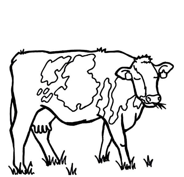 600x578 Dairy Cow Netart
