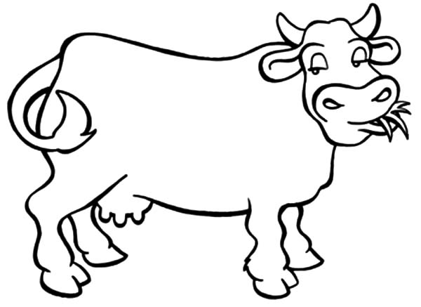 600x437 Dairy Cow Outline Colouring Page Dairy Cow Outline Colouring Page