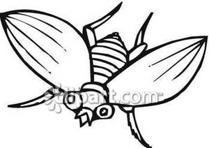 300x212 Outline Of A House Fly Royalty Free Clipart Picture