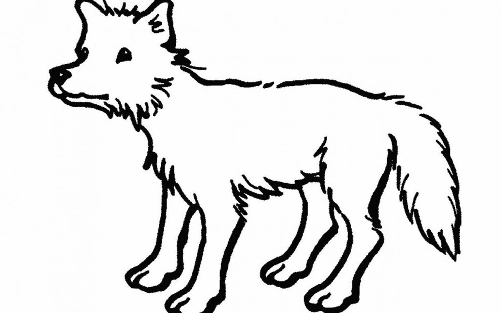 990x619 Beautiful Outlines Of Animals 93 On Coloring Pages For Adults With